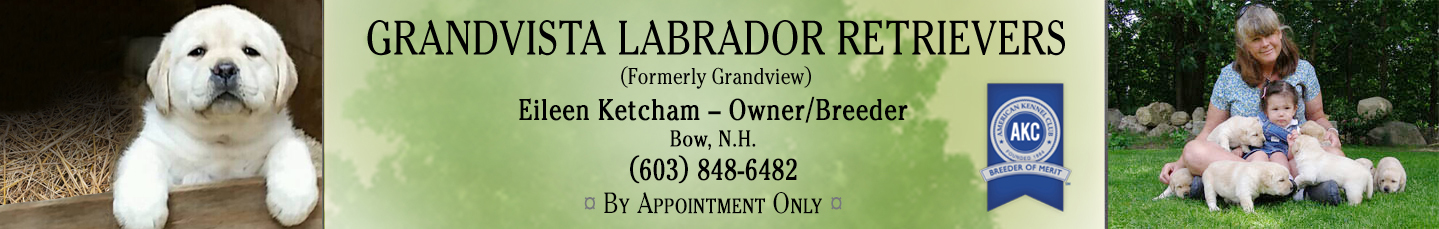 Grandvista Labradors Header